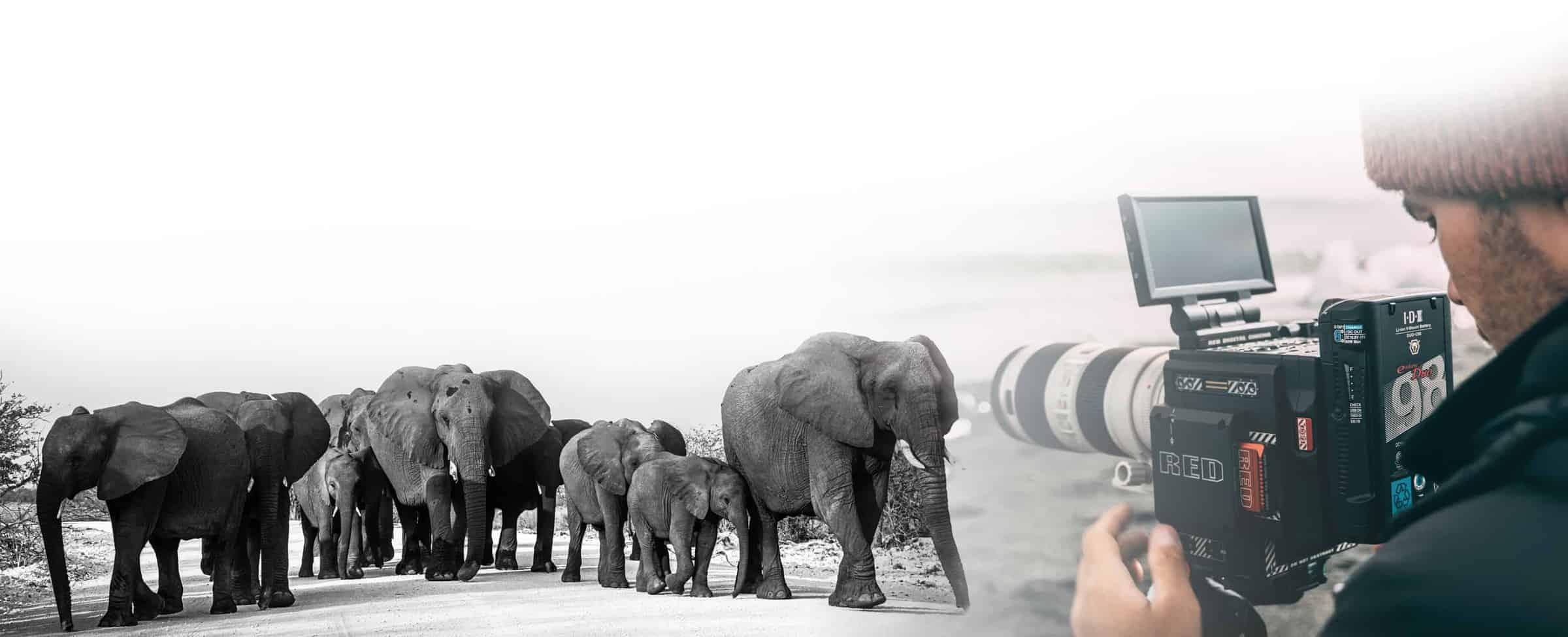 Photo Elephant Namibie Animaliere Jcpieri